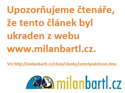 Milan Bartl s mláďaty kakadu inka